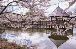 Gazebo and Boardwalk With Cherry Blossoms Royalty Free Stock Image