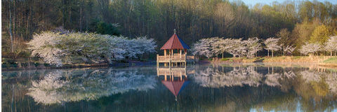 Gazebo and cherry trees on pond Royalty Free Stock Photography