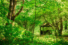 Gazebo in green spring summer garden. Old wooden gazebo in green spring summer garden park forest. Garden pergola with forest in background Royalty Free Stock Photography