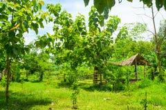 Gazebo in green vegetation. Summer day stock image