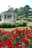 Gazebo i den Rose trädgården Arkivfoto