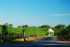 Gazebo i vingården Arkivbilder
