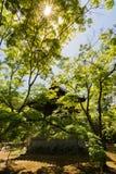 Gazebo in Japanese garden, Kyoto, Japan Stock Photos