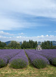 Gazebo In The Lavender Fields royalty free stock image