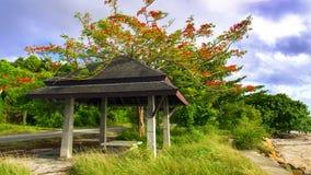 Gazebo na Flamboyan drzewie i drodze zdjęcia royalty free