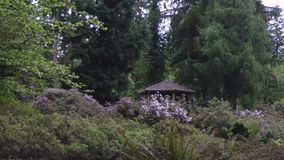 Gazebo in rhododendron garden with blooming spring. Flowers stock video