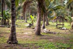 Gazebo in a Rural Area of Koh Samui, Thailand. Royalty Free Stock Image