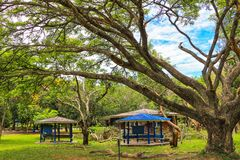 Gazebo under the big tree royalty free stock image