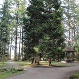 Gazeboen och trä undertecknar parkerar in Royaltyfri Fotografi