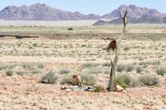 Gazela em Namíbia Imagens de Stock