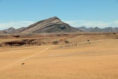 Gazella o gemsbok solo dell'orice nel deserto del de Namib vicino al solitario in Namibia Fotografie Stock Libere da Diritti