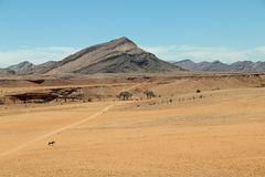 Gazella ou gemsbok solitário do Oryx no deserto do de Namib perto do solitário em Namíbia Fotos de Stock Royalty Free
