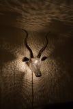 Gazelle σε Weeke Barton, Dartmoor στοκ εικόνα με δικαίωμα ελεύθερης χρήσης