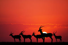 gazelle in African landscape Royalty Free Stock Images
