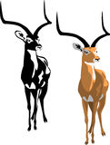 Gazelle. Impala - black and color illustrations Royalty Free Stock Photography