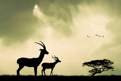 Gazelle silhouette at sunset Royalty Free Stock Photos