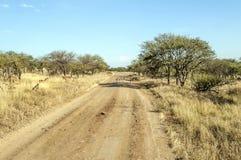 Gazelles in road Stock Photo