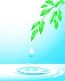 gałęziastej kropli spadać liść bryzgają wodę Obrazy Stock