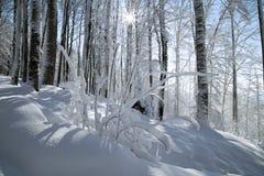 gałęziasty krzaka zimno marznąca zima Fotografia Stock