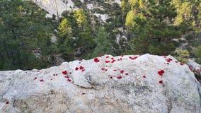 Gazing над скалой стоковые изображения