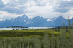 Gazing at the Tetons. Sagebrush perspective of the Grand Tetons Stock Photography