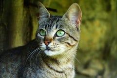 Cats Gazing Stock Image