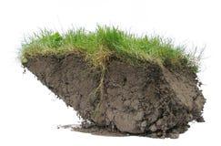 Gazon avec l'herbe Photographie stock libre de droits