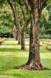 Gazon in een begraafplaats met grafstenen Royalty-vrije Stock Afbeeldingen