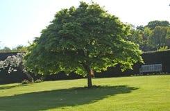 Gazon en bomen in Co Antrim Noord-Ierland stock fotografie