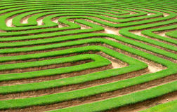 gazon of gras het labyrint van de Tuin   Stock Afbeeldingen