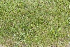 Gazon in het park Textuur van groen gras stock afbeeldingen