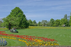 Gazon met bloemen in het centrum van het Park Stock Foto's