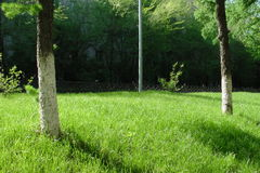 Gazon, park, bomen, Stock Foto's