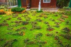 Gazon rozprasza z nagietków kwiatami od zimy inva Fotografia Stock