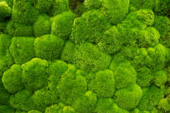 Gazon vert Photos stock