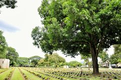 Gazon w cmentarzu z headstones Zdjęcie Royalty Free