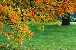 Gazon w ogródzie botanicznym w Moskwa z starym drzewem Obrazy Stock