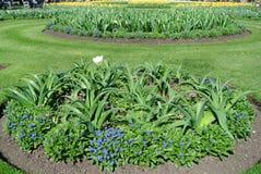 Gazon z daffodils fotografia stock
