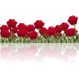 Gazon z kwiatów czerwonymi tulipanami odbiciem i ilustracji