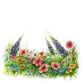 Gazon z wildflowers na białym tle Akwareli kwiecisty tło ilustracja wektor