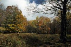Gazons scéniques de chariot d'automne @ Photo stock