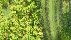 Gazonsprenkelinstallatie op tuin met groene gras en cactus stock videobeelden