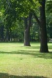 gazonu dębu drzewa Obrazy Royalty Free