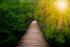 Głęboka lasowa droga przemian w świetle słonecznym Fotografia Stock