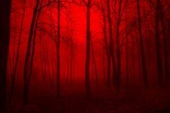 głębokie lasu Fotografia Royalty Free