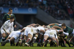 GBR Rugby Union England Vs South Africa Stock Photo