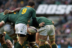 GBR Rugby Union England Vs South Africa Royalty Free Stock Photos