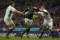 GBR Rugby Union England Vs South Africa Stock Photos