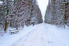 Gdansk Oliwa parkerar i vintertiden Arkivfoton