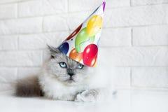 Gderliwy kot pozuje w urodzinowym kapeluszu obraz stock